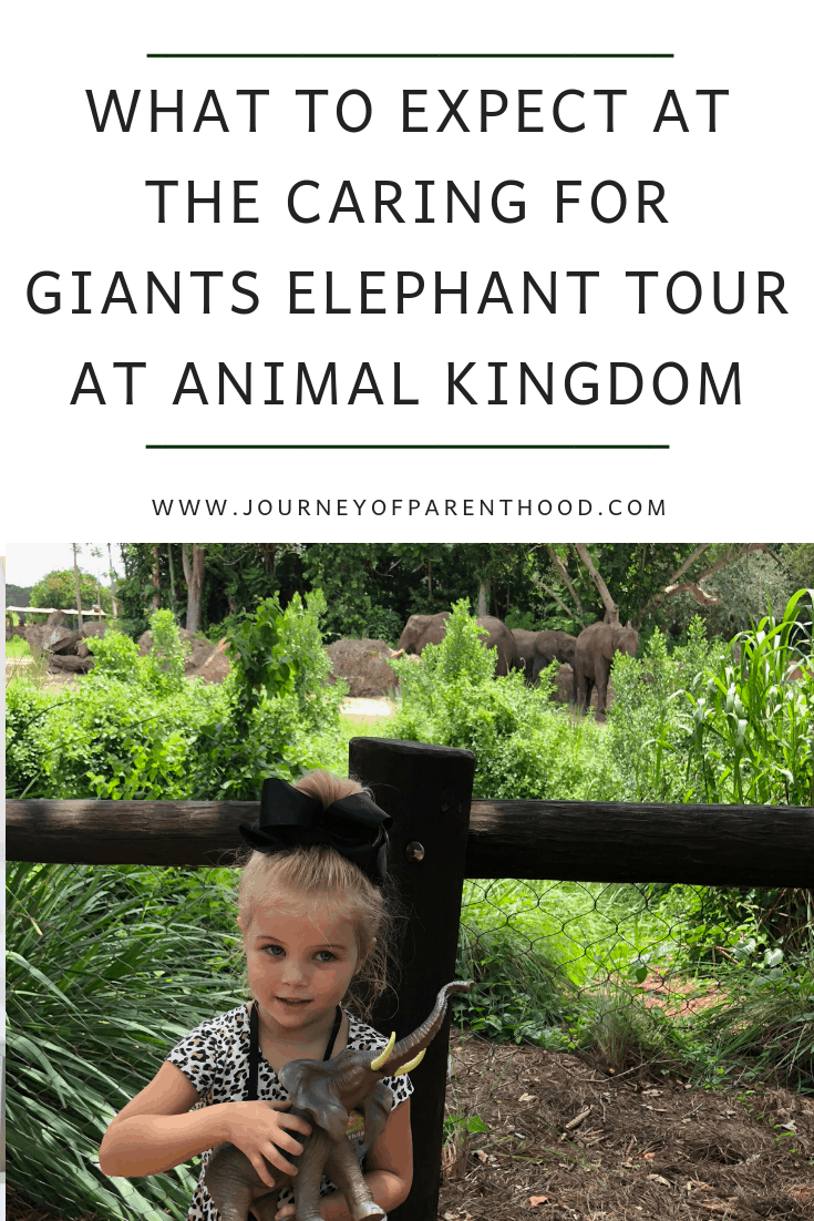 what to expect at the caring for giants elephant tour at animal kingdom