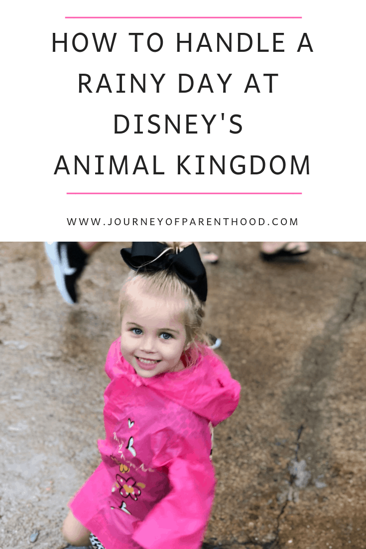 how to handle a rainy day at disney's animal kingdom