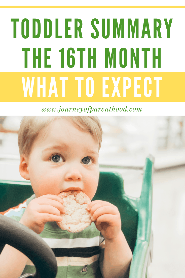 toddler summary the 16th month what to expect