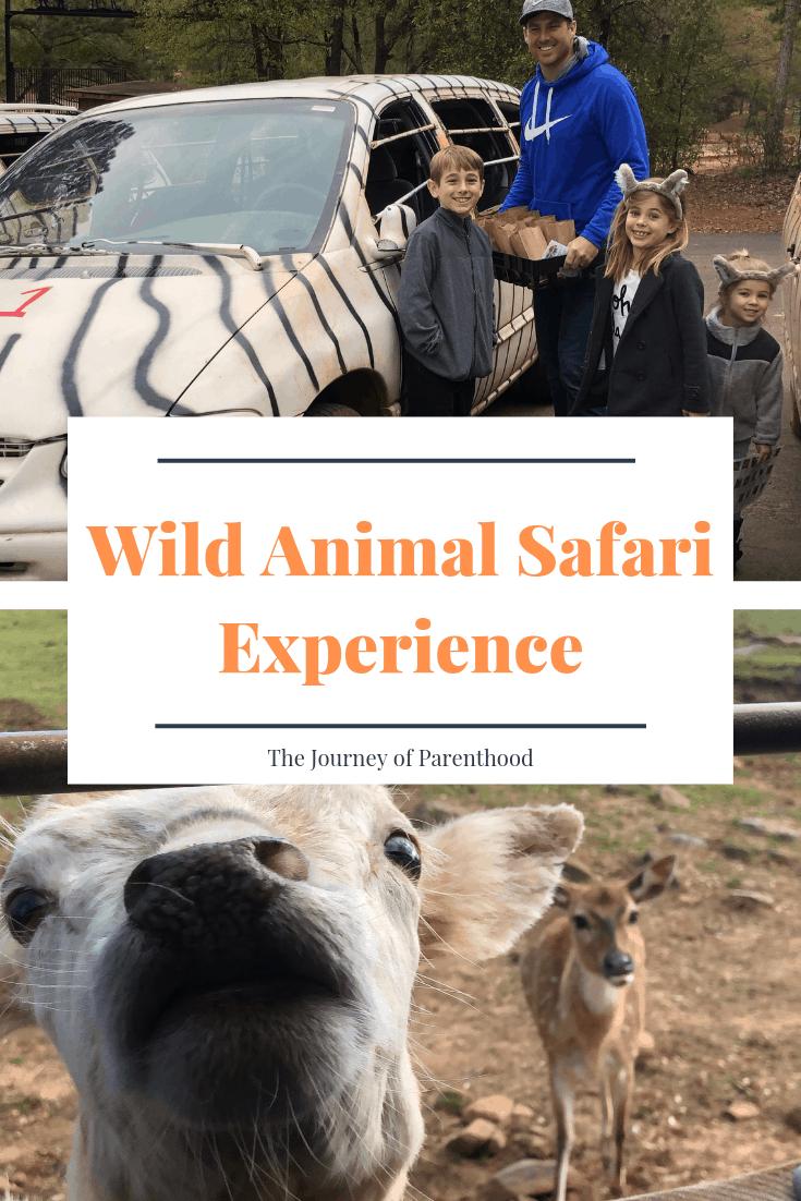 wild animal safari experience pin
