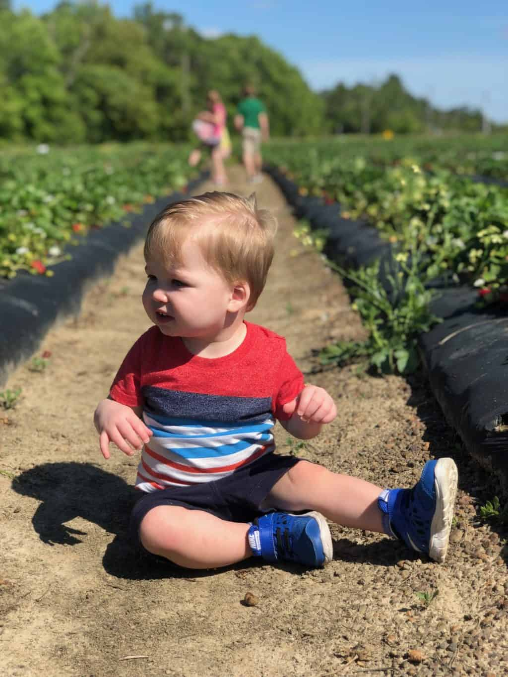 strawberry patch with kids