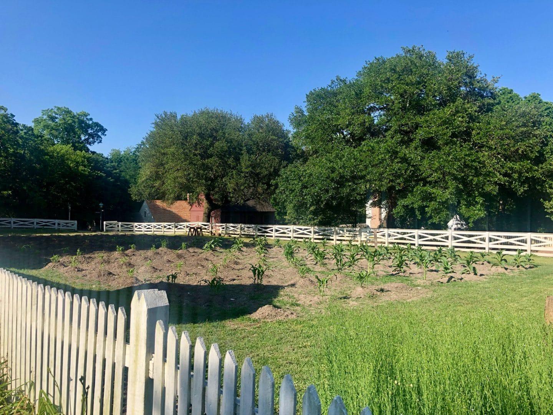 walking around colonial willamsburg