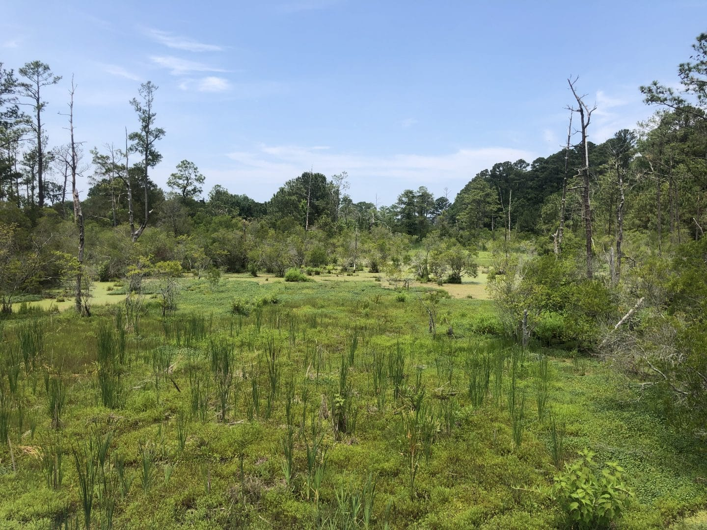 swamp at historic Jamestown in Virginia