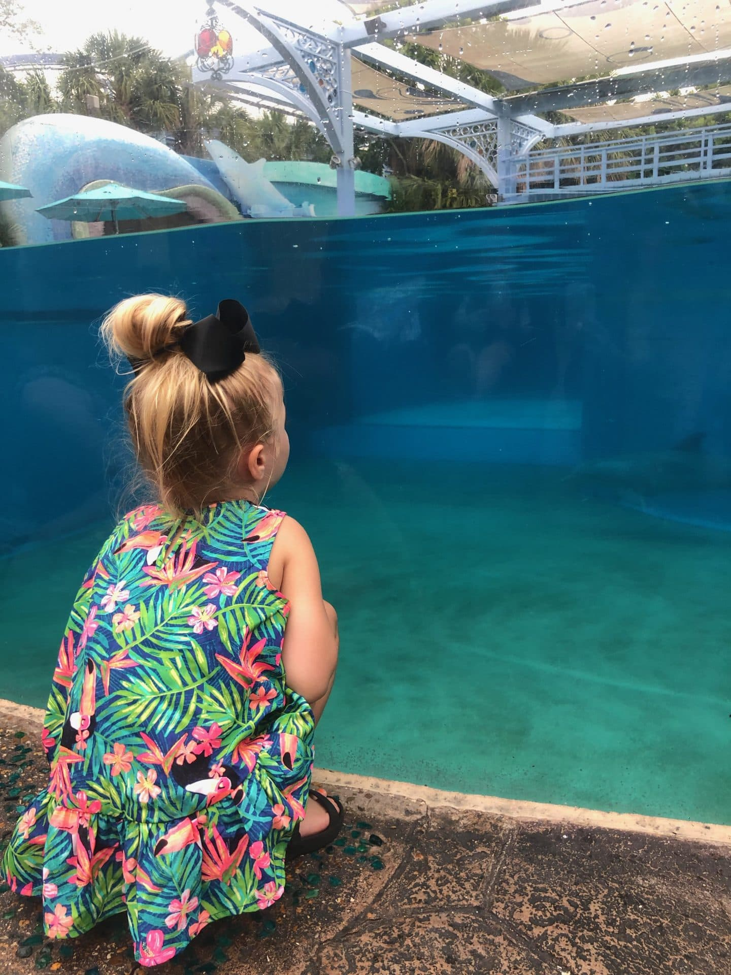 visiting the dolphins at sea world
