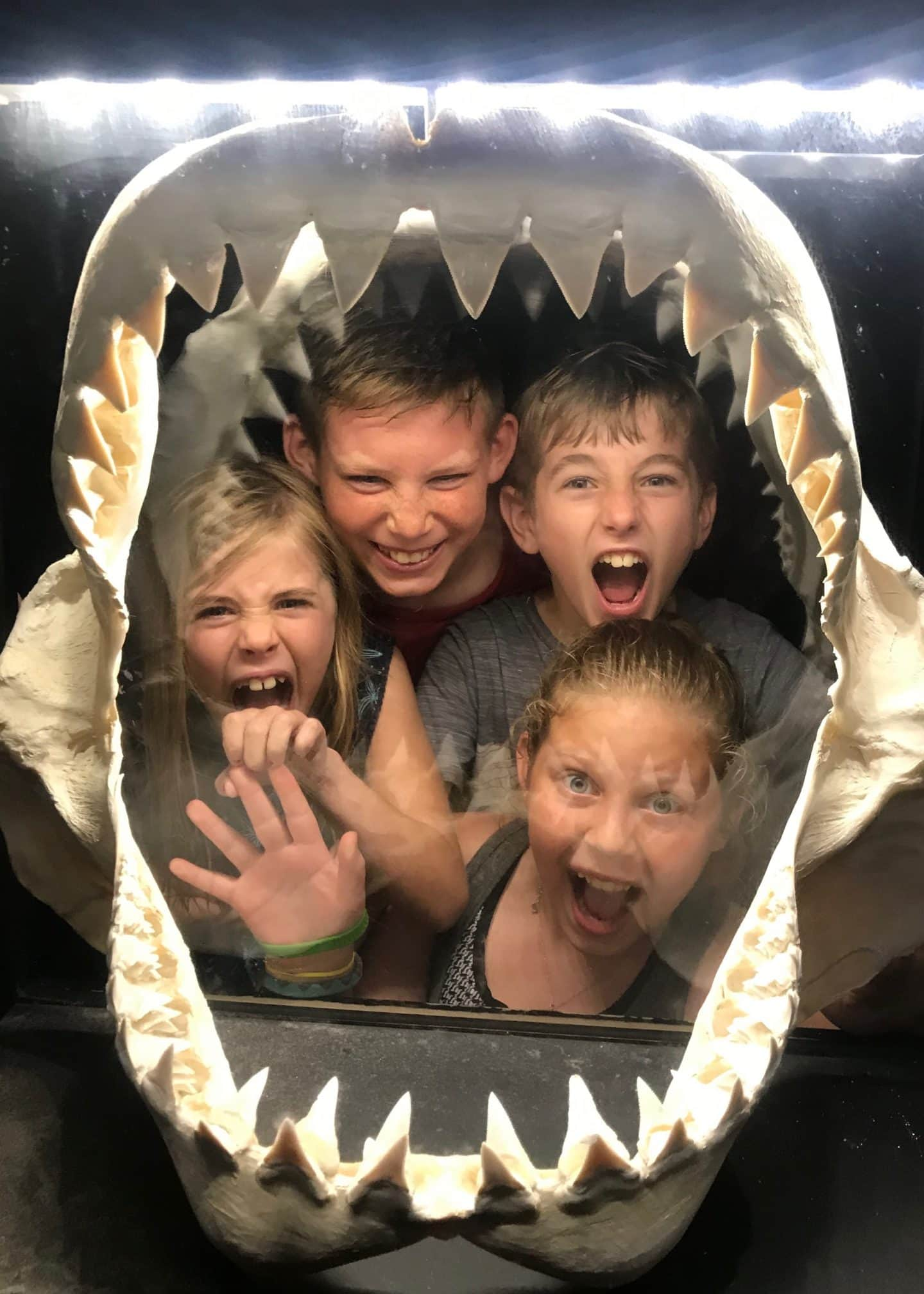 shark area at sea world