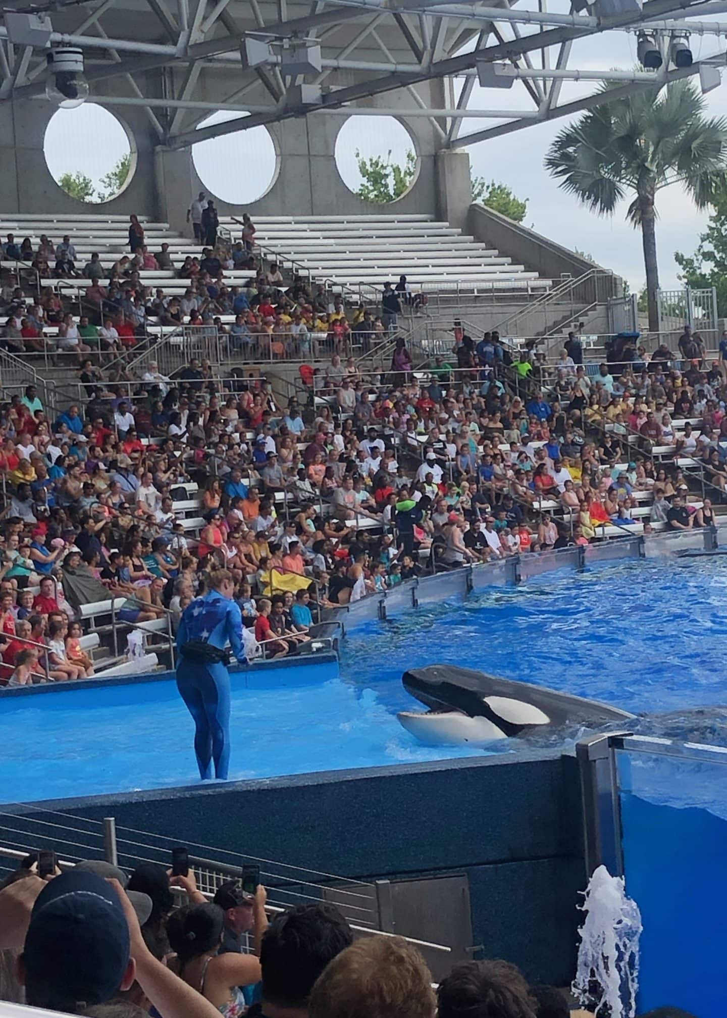 one ocean show at sea world