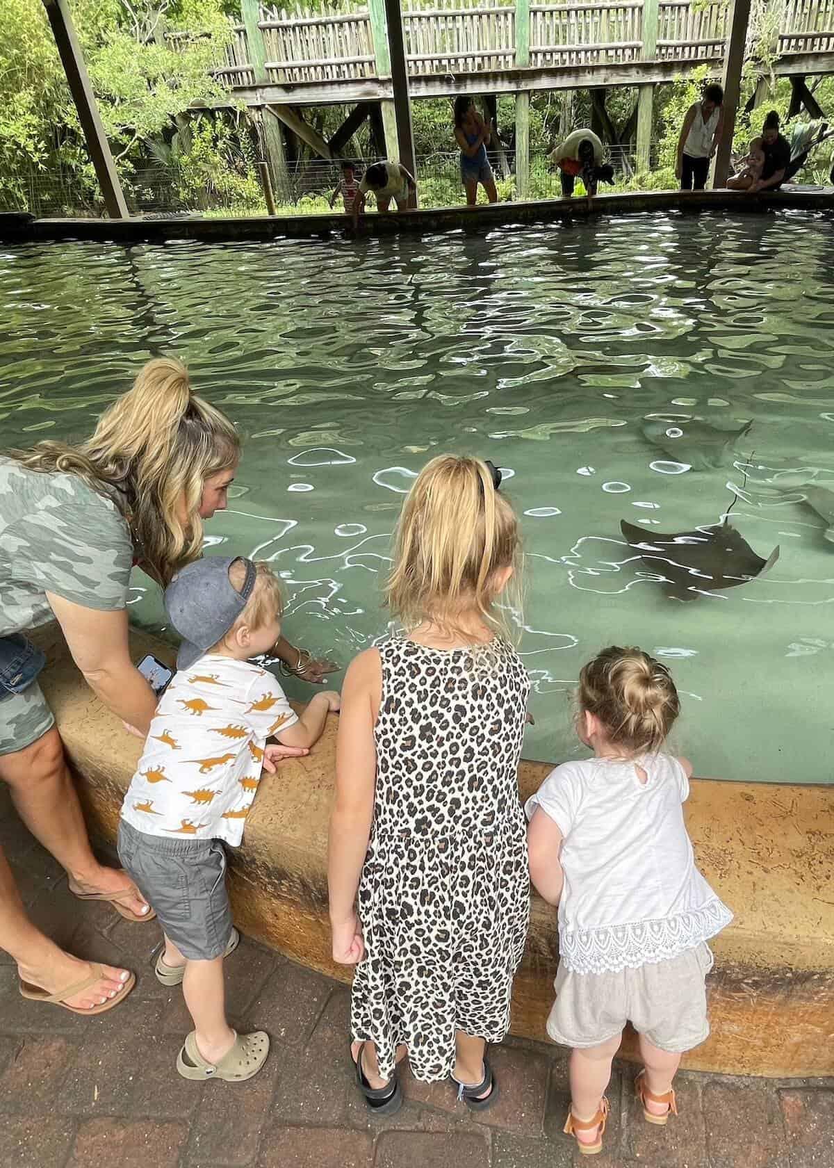 stingray bay at jacksonville zoo and gardens