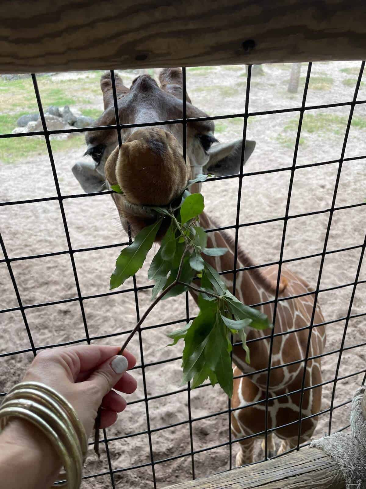 visiting jacksonville zoo and gardens